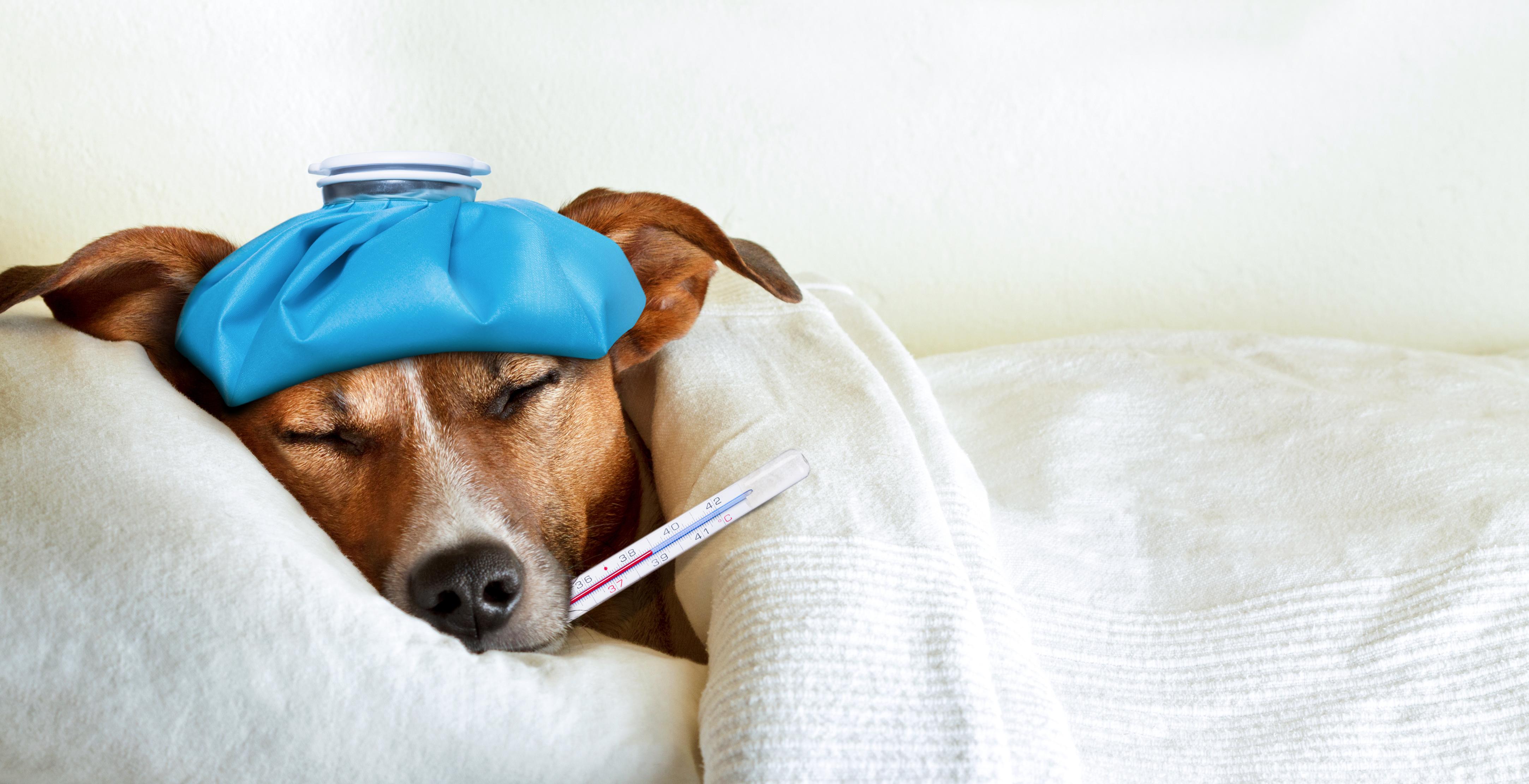 Tierversicherung Hund