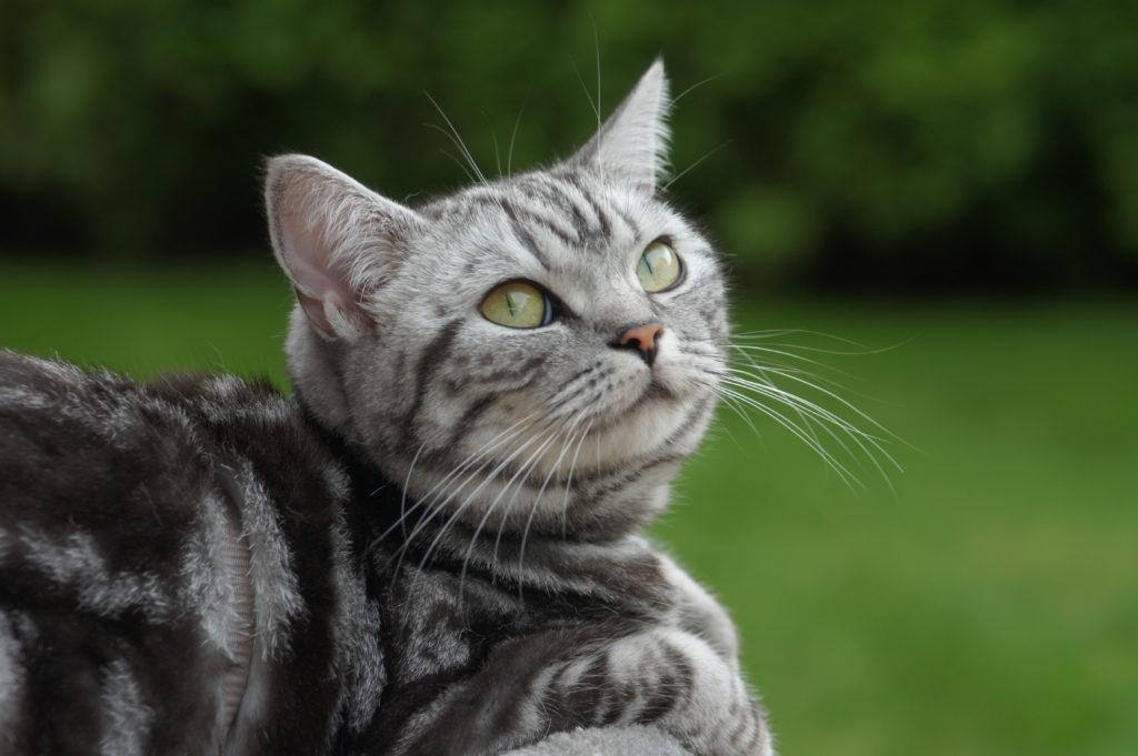Tierversicherung Katze